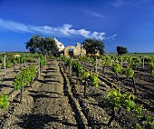 Ruined building in a vineyard, Marsala, Sicily