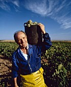 Man Carrying Basket of Harvested Grapes