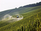 Combatting mildew by helicopter near Bernkastel-Kues, Mosel