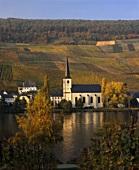 Dorfkirche in Piesport vor Goldtröpfchen und Falkenberg,Mosel