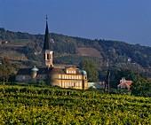 Austrian vineyard near Gumpoldskirchen, south of Vienna