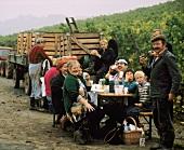 Cheerful company grape picking near Ochsenfurt in Franken