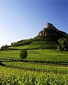 Weinberg vor geschichtsträchtigem Felsen von Solutre, Burgund