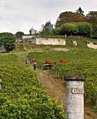 Weinberg des Château Ausone zur Lesezeit,St-Emilion,Bordeaux