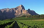 Bellingham Winery in Paarl, Soouth Africa