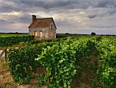 Stone house in Chenin Blanc vineyard, Montlouis, Loire