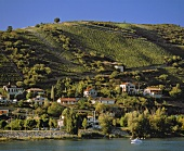 Weinberg oberhalb Ampuis in der AC Cote Rotie am Rhone-Ufer