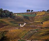 Der Weinberg Bacchus westlich von Chateau Chalon im Jura