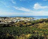 Weinbau um Port-Vendres am Mittelmeer, Roussillon, Pyrenäen