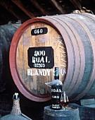 1863er Madeira-Flasche bei Adegas de Sao Francisco in Funchal