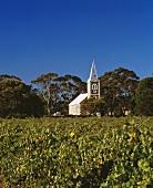 Weinberg Hill of Grace der Henschke-Familie, Eden, Australien