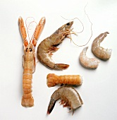 Norway Lobster and Assorted Shrimp