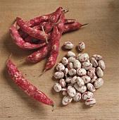Borlotto Beans and Pods