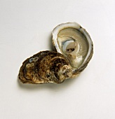 Oyster with Top Shell Removed