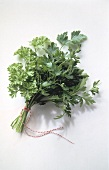 Herb Bouquet with Parsley and Cilantro