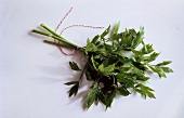 Bouquet of Lovage Tied with a String