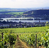 View from Klosterberg of Rüdesheim am Rhein, Rheingau