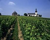 Church at Glock vineyard, Nierstein in Rheinhessen