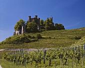 Burg Ortenberg über dem Schlossberg, bei Offenburg in Baden
