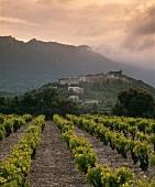 Abend über dem Weinort Cucugnan, Corbieres, Südostfrankreich
