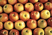 Eine Fläche mit rot-gelben Äpfeln