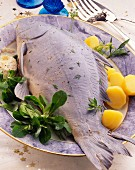 Carp cooked blue with potatoes & corn salad on plate