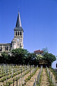 Vineyard in centre of Chenas in Beaujolais, Burgundy