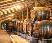 Fässer (Gut Bisquertt) im ältesten Weinland des Südens: Chile