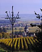 Herbst im Weinberg bei Ville-Dommange nahe Reims, Champagne