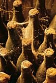 Flaschenlager im Weingut Tsantali, Agios Pavlos, Griechenland