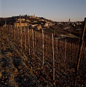 Autumnal Barolo vineyard in Piedmont, Italy