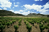 Jumilla wine-growing region, Spain, home of Monastrell grape