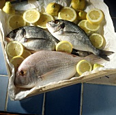 Bream on Paper in a Box with Lemon Slices