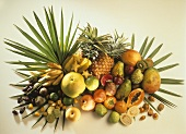 Exotic fruit Still Life with Palm Leaves