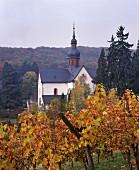 Vineyard at Kloster Eberbach above Hattenheim, Rheingau