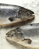 Irish wild salmon (fresh - clear eyes, not fresh - cloudy eyes)