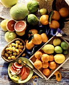 Zitrusfrüchtestilleben : Grapefruits, Pomelos, Ugly