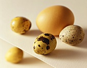 Quail Eggs with One Brown Egg