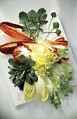 Assorted Leaf Lettuce Still Life