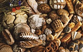 Still Life of Many Assorted Breads