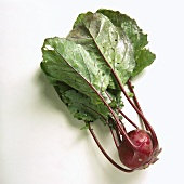 One Red Kohlrabi