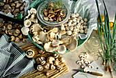 Still Life of Several Assorted Mushrooms