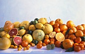 Orangen,Mandarinen,Zitronen,Limonen,Grapefruit,Pomelo,Kumquat