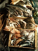 Assorted Salt Water Fish in Boxes