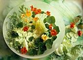 Endive salad with cucumbers, iceberg lettuce, nasturtiums