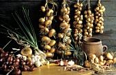Several Onions Still Life