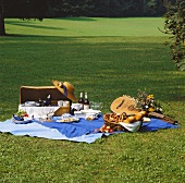 Beautiful Lawn Picnic in Summertime