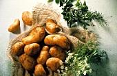 Several Whole Potatoes on Burlap; Fresh Herbs