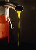 Fresh Olive Oil Flowing from the Press
