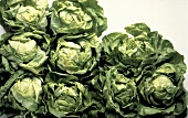 Several Heads of Butterhead Lettuce